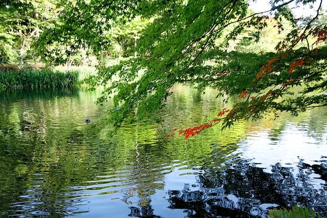 10月の雲場池