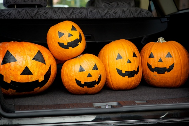 かぼちゃの運び出し