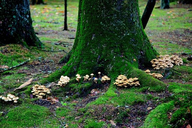 別荘に生える苔ときのこ