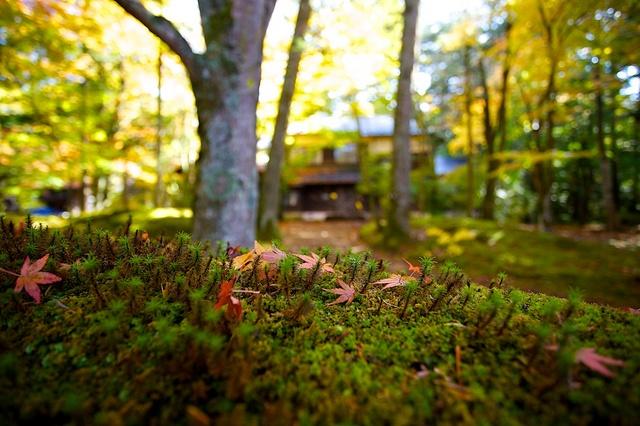 苔、落ち葉、紅葉、別荘