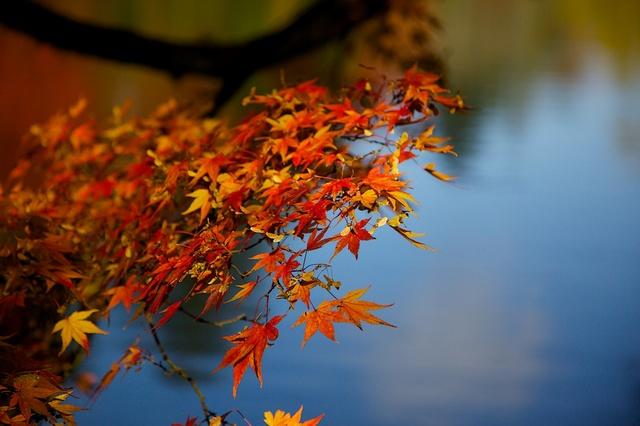 紅葉の雲場池6