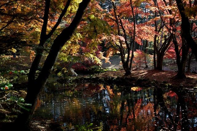 紅葉の雲場池2
