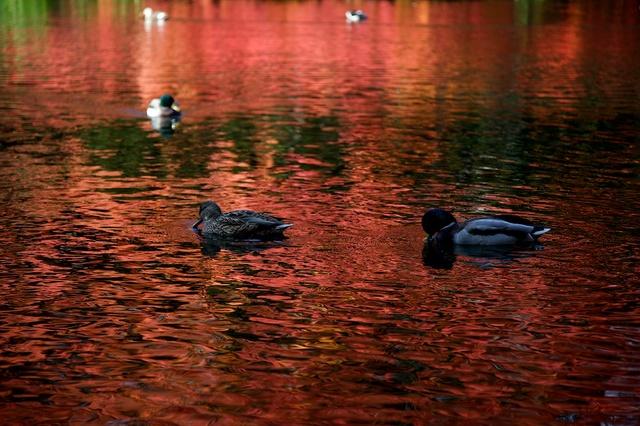 紅葉の雲場池4