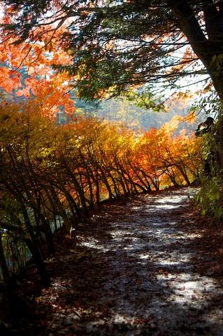 紅葉の雲場池8