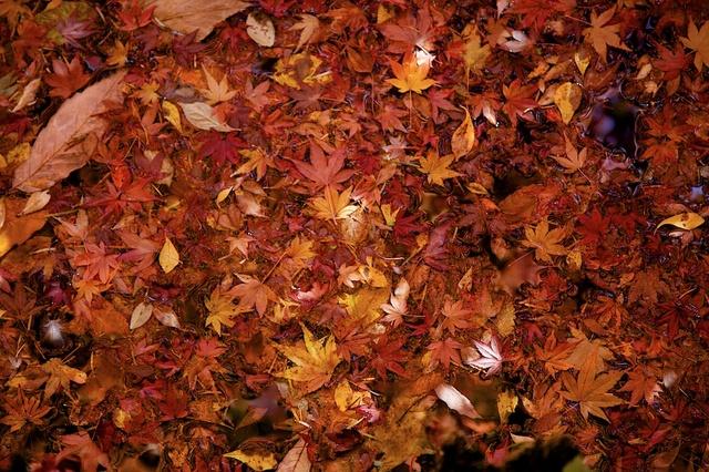 紅葉の雲場池10