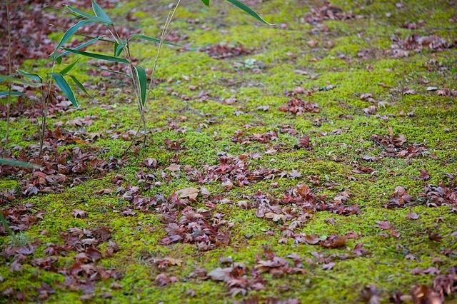 苔の上の落ち葉