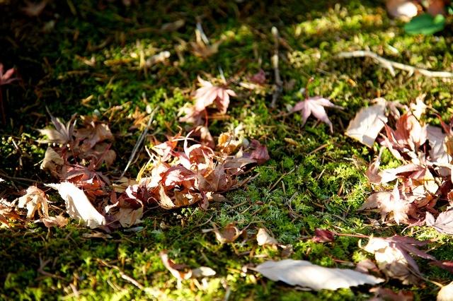 カサカサ落ち葉