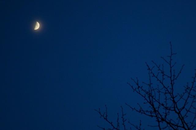 冬の枝と冬の月