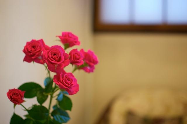 廊下のお花