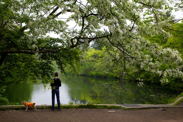 春の雲場池