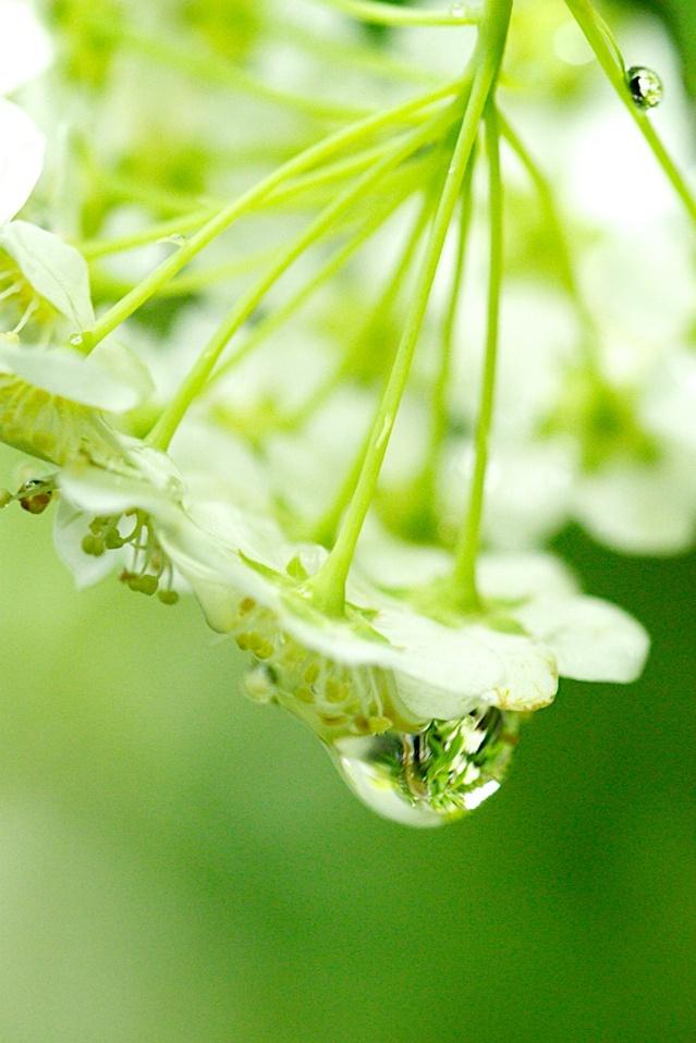 雨と花が作り出す芸術