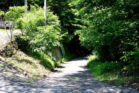 軽井沢宿から坂本宿まで中山道38