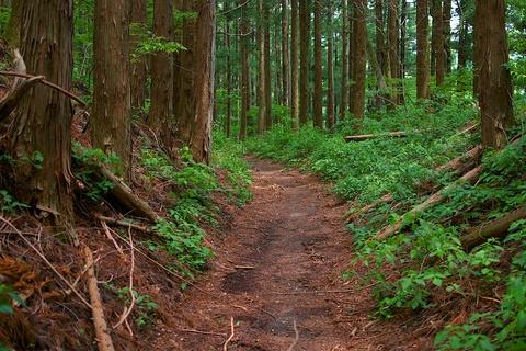 軽井沢宿から坂本宿まで中山道63