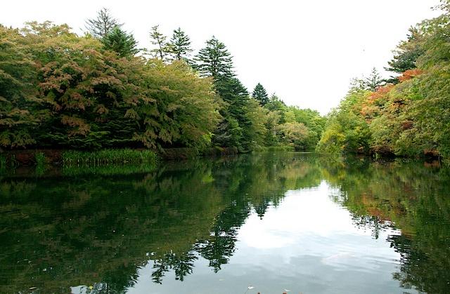 9月終わりの雲場池