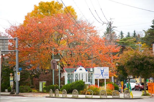 旧軽井沢ロータリーの桜の木
