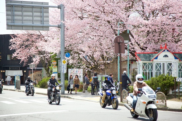 軽井沢遅咲きの桜02