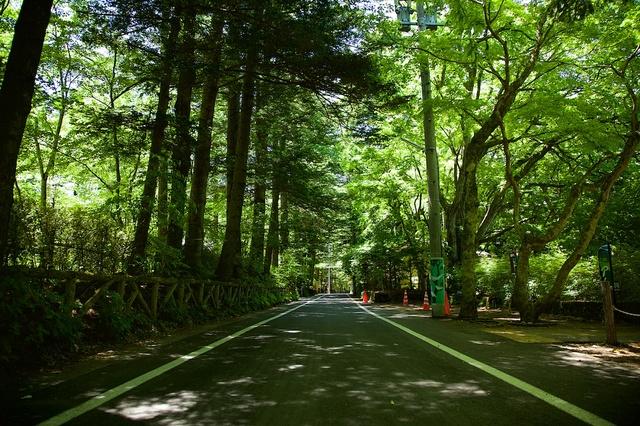 6月の軽井沢雲場池01