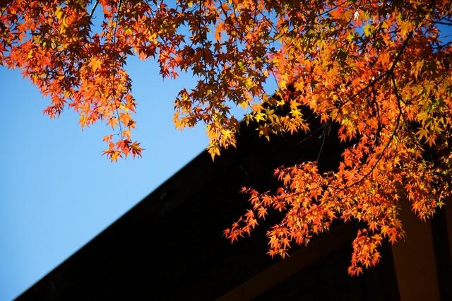 軽井沢の紅葉2
