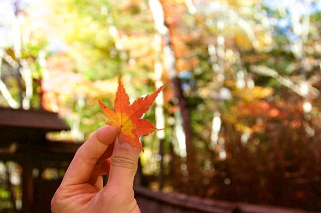軽井沢の紅葉3